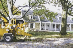 Tree Pruning Pittsburgh