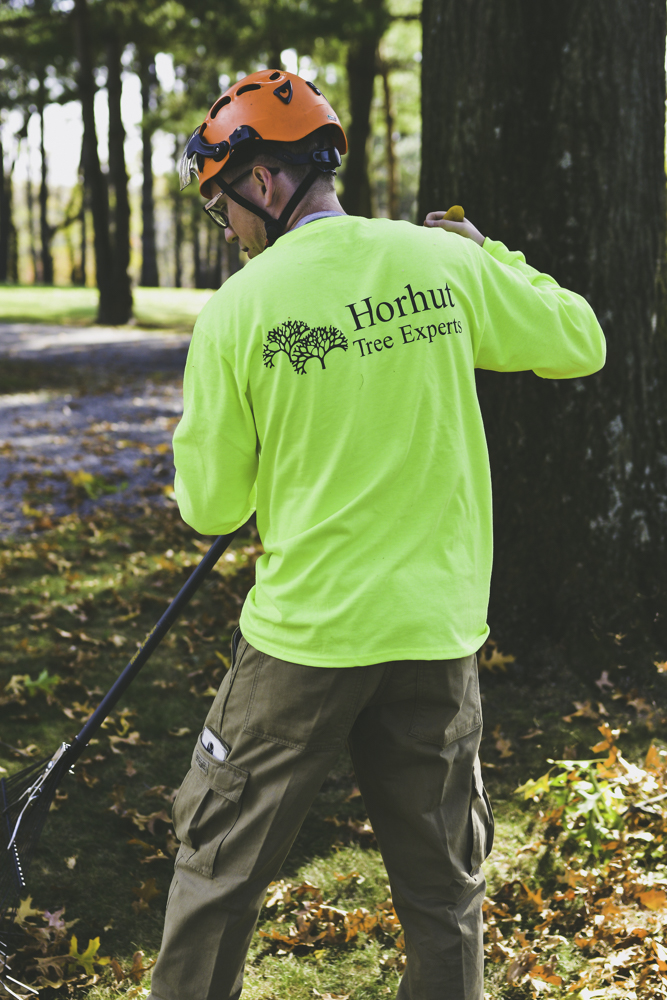Expert Arborists Pittsburgh