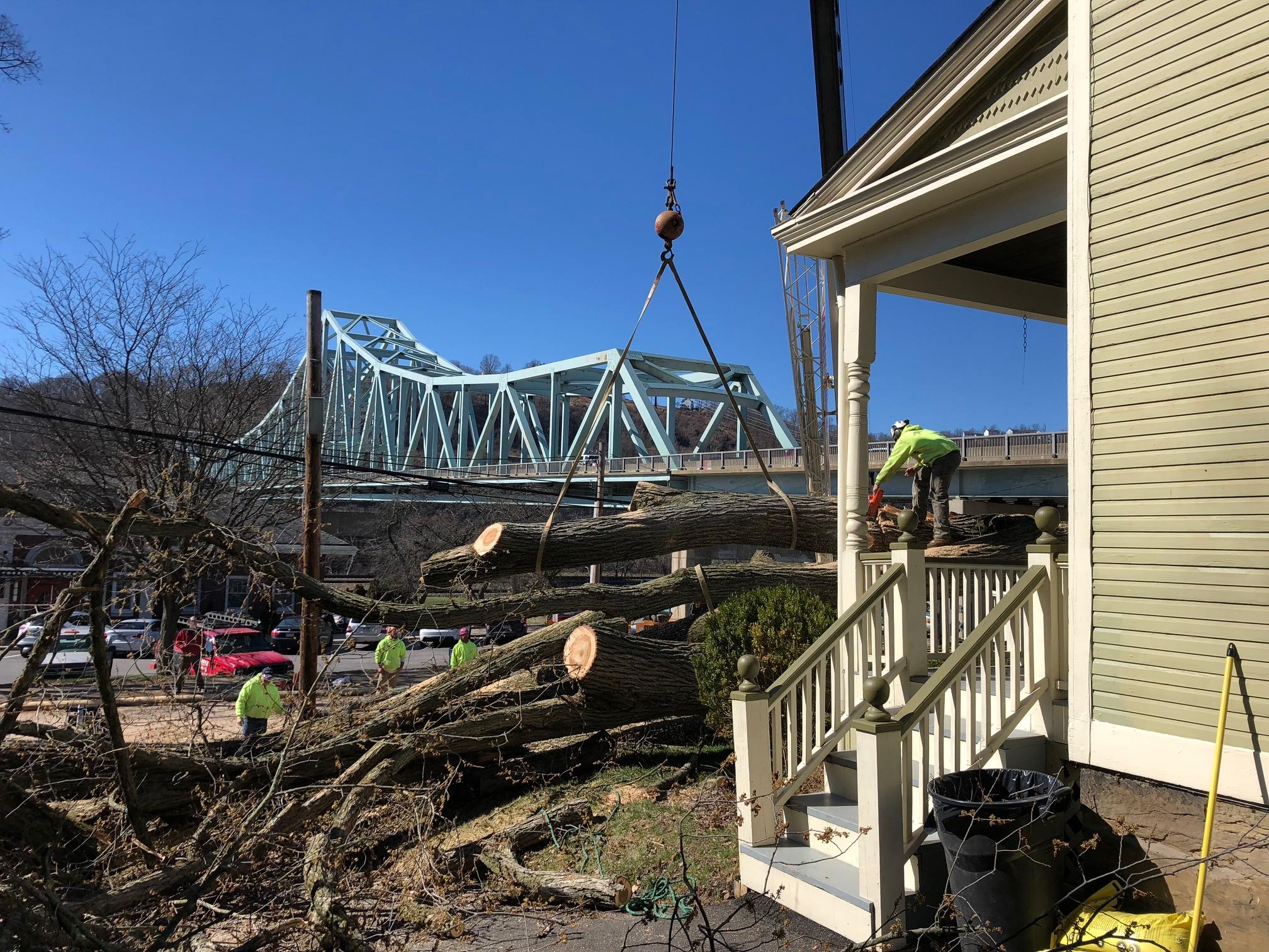 Tree Removal Pittsburgh
