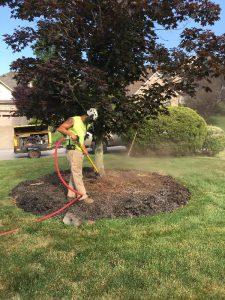 Root Excavation Pittsburgh