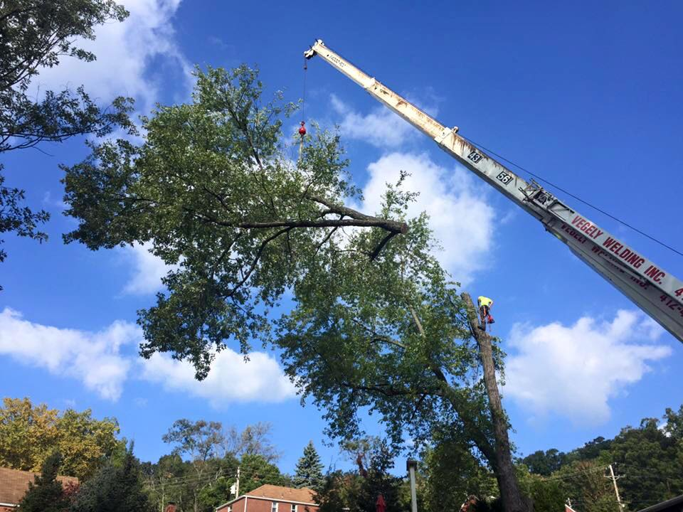 Tree Removal Service Pittsburgh
