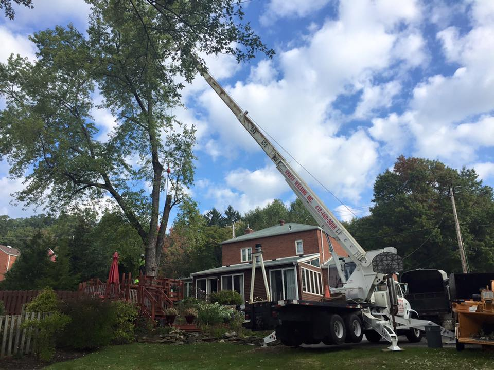 Tree Services Pittsburgh