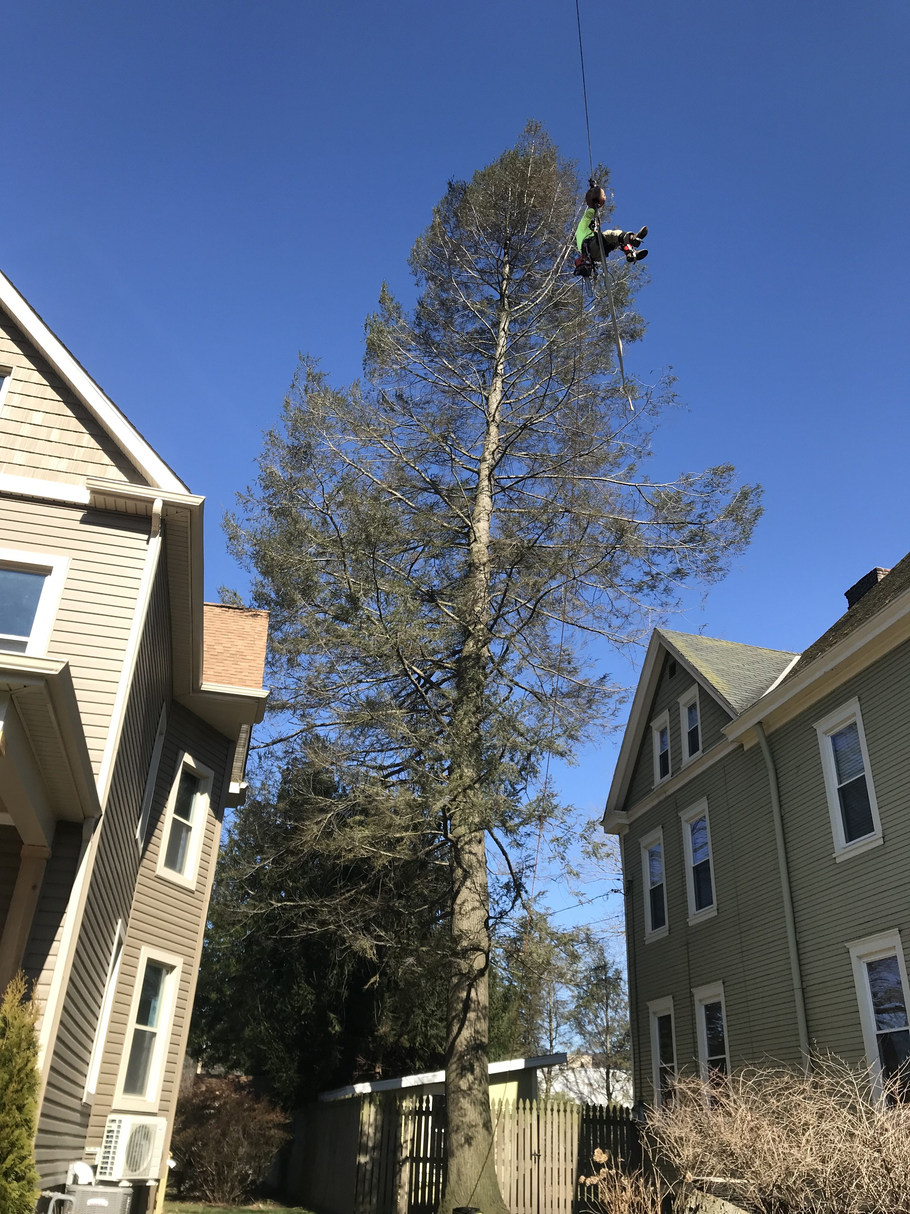 Residential Tree Removal Pittsburgh