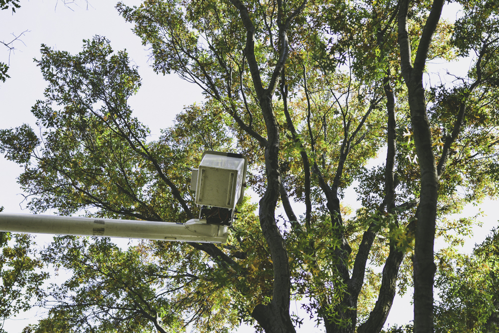 Tree Service Pittsburgh