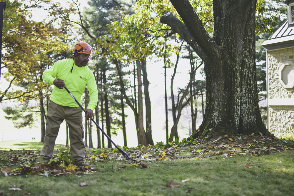 Tree Care Pittsburgh