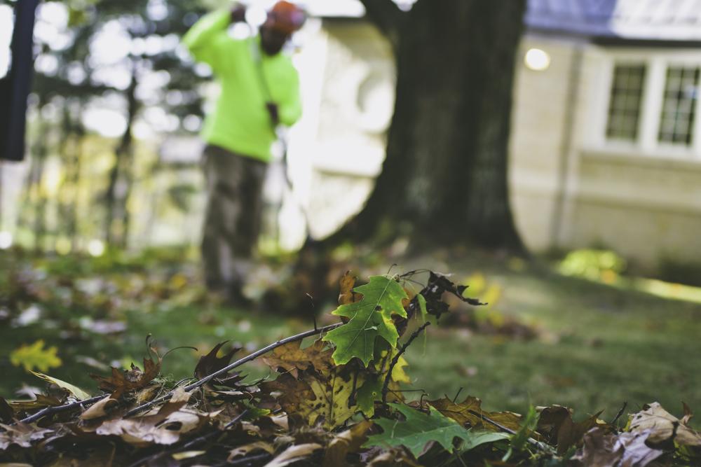 Pittsburgh Arborist Service