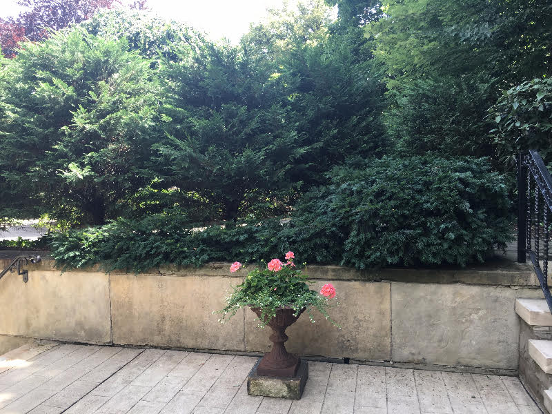 Shrub Service Pittsburgh