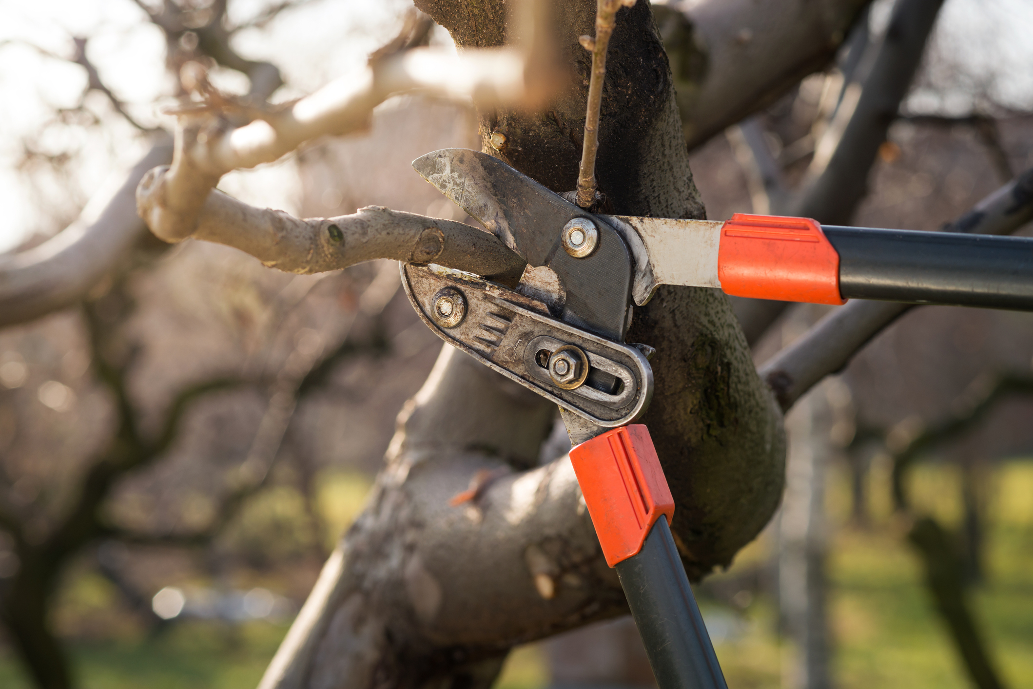 Tree Pruning with Shears