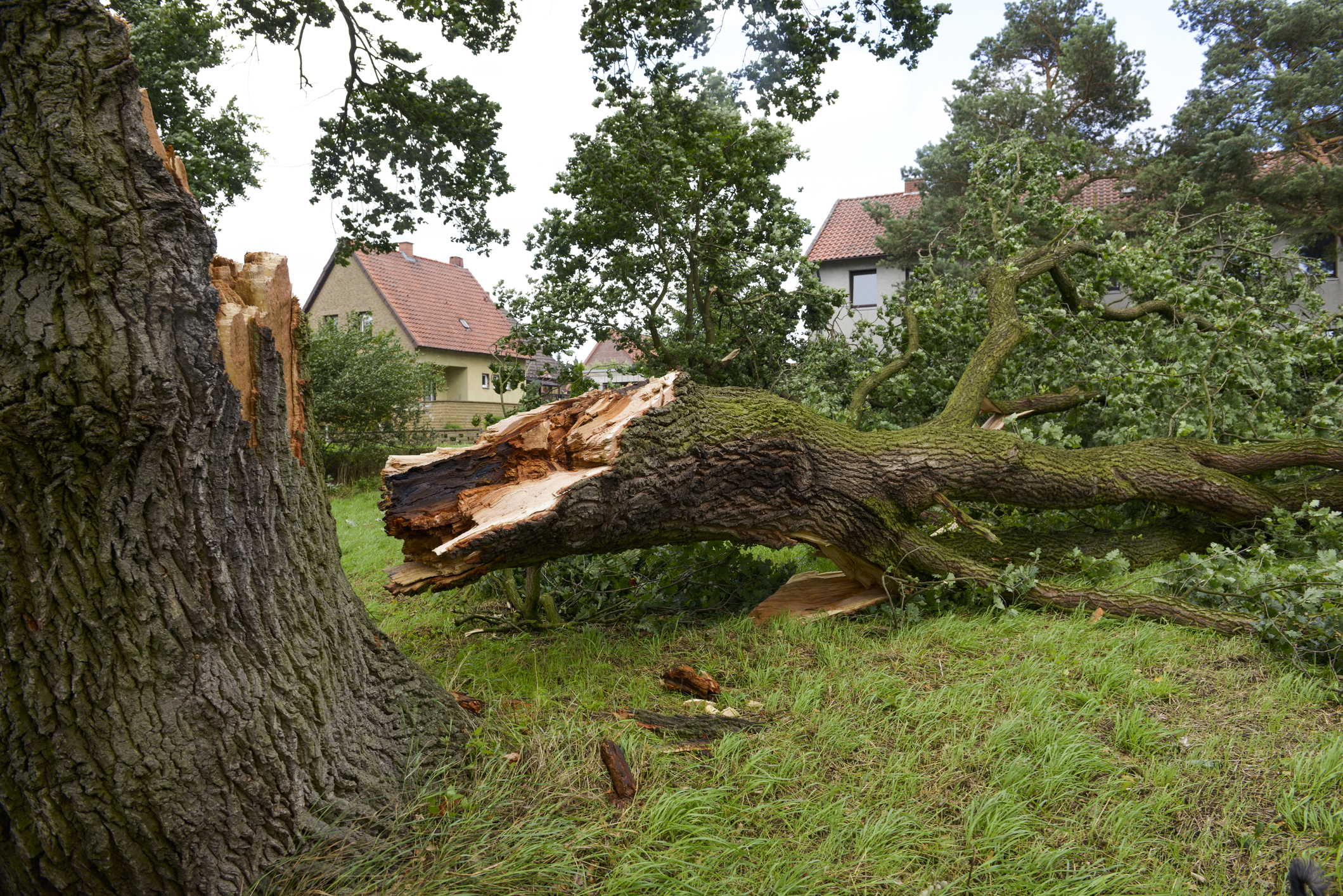 Tree Fallen over on property