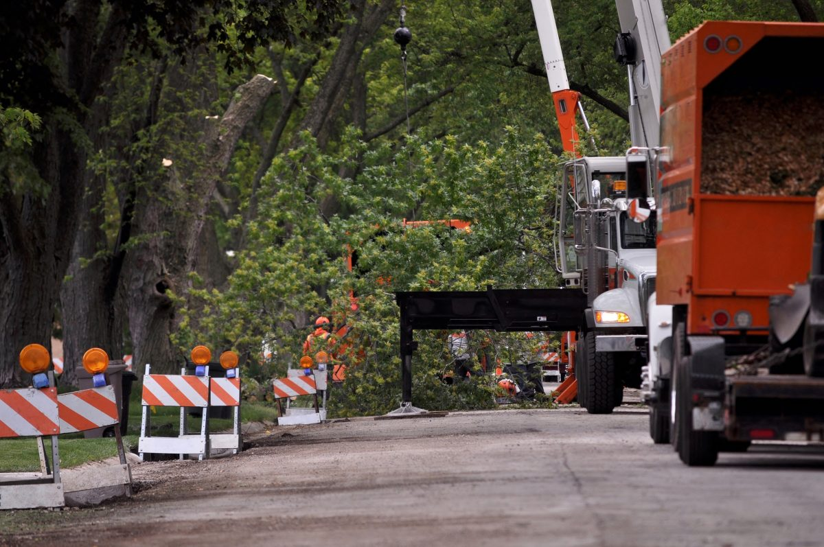 Tree Service for Fallen Tree